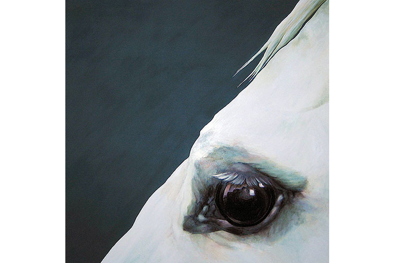 EQUI EYE - oil on canvas (now only available in print)