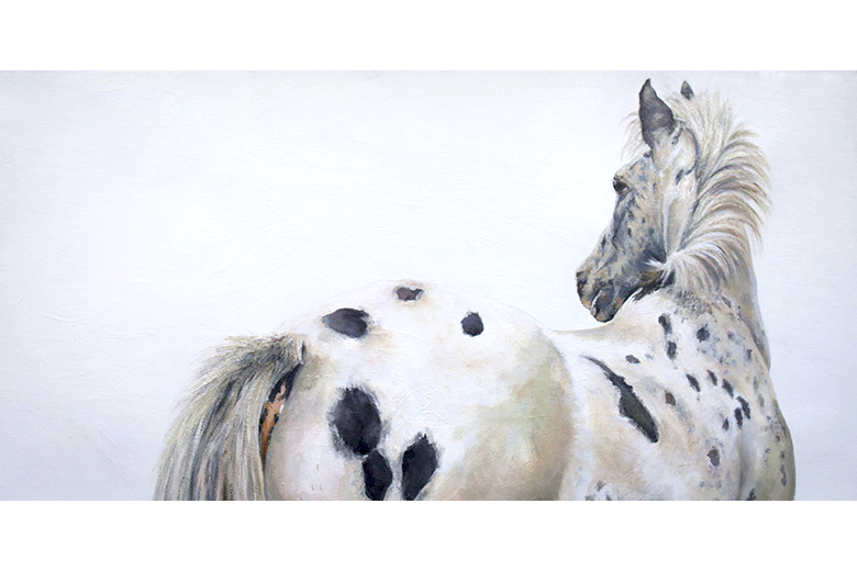 SOUTH ISLAND APPALOOSA 2.5' x 5' - oil on canvas